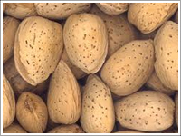 Almond With Shell We Bring Forth An Excellent Quality Shelled Almonds To The Clients Based