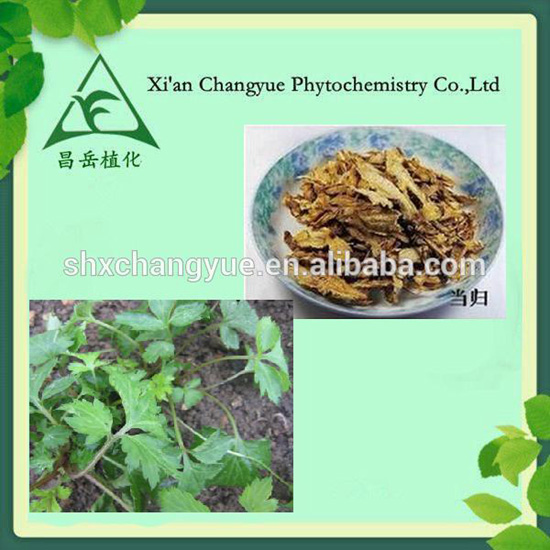 Angelica Sinensis Extract Natural Cosmetic Product