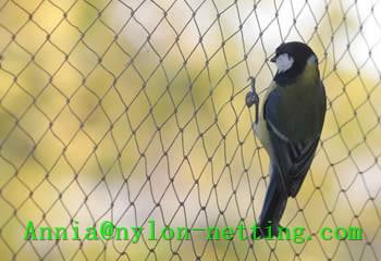 Anti Bird Net Controls Effectively