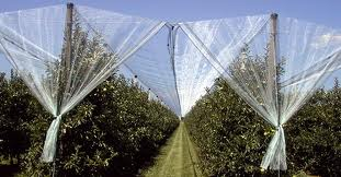 Anti Hail Netting For Agricultural Use