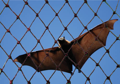 Bat Netting Keeps Bats Away From Your Attics