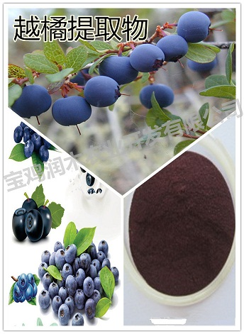 Bilberry P E Anthocyanidins 25 Uv
