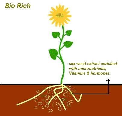 Bio Rich Fertilizer Product
