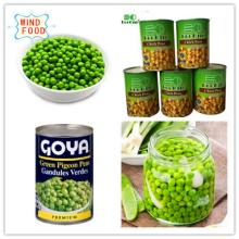 Canned Green Peas In Good Quality