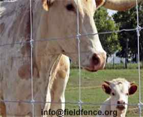 Cattle Fence Heng Shui