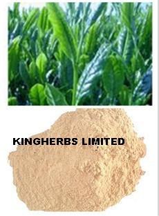 China Green Tea Extract