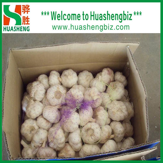 Chinese Normal White Garlic With Excellent Quality