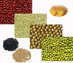 Coarse Grains Supply From Ningxia China