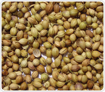 Coriander Seeds Best Indicative Offer