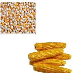 Corn Yellow Dry Grade A