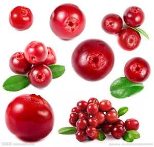Cranberry Extract Opc 95