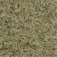 Cumins Seeds Exporter Or Seller
