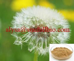 Dandelion Extract 4 Flavonoids