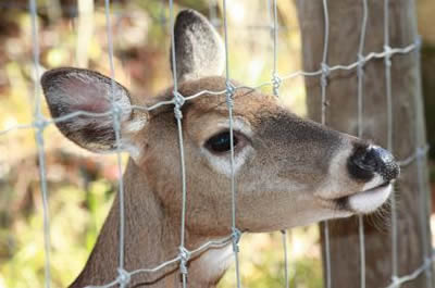 Deer Fencing Ideal For Farming And Exclusion
