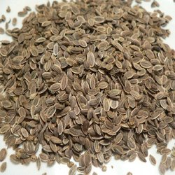 Dill Seed Gives You Many Health Benefits We Offer Best Quality