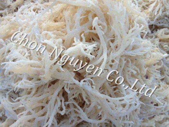 Dried Eucheuma Cottonii Seaweed