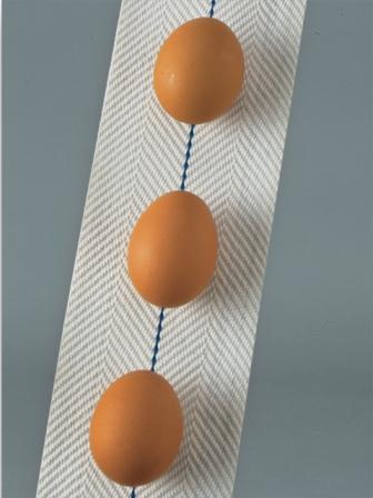 Egg Conveyor Belt Transport