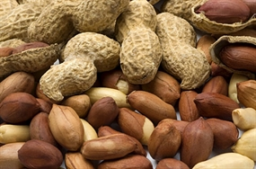 Egypt High Quality Peanuts In Shell