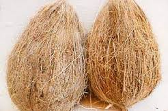 Export Quality Brown Semi Husked Coconuts