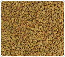 Fenugreek Seeds Best Indicative Offer