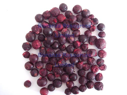 Freeze Dried Black Currant