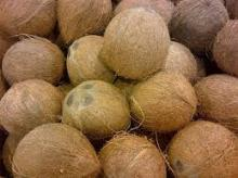 Fresh Coconut Husked Or De Tender Cococnuts Can Be Supplied