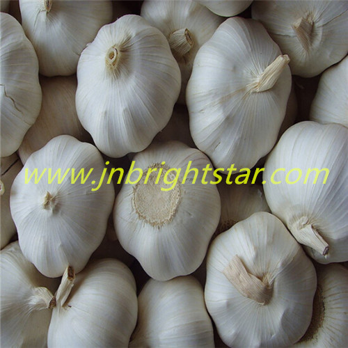 Fresh Garlic In Mesh Bag Or Carton