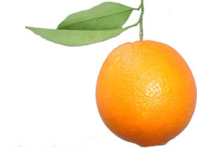 Fresh Orange Turkish Turkey Orange