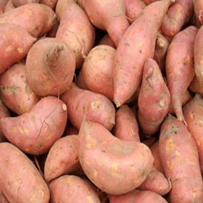 Fresh Sweet Potato From Costa Rica