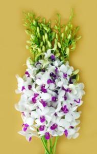 Freshh Cut Orchids Flower