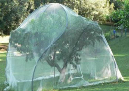 Fruit Cage Netting Comes In Knotless And Extruded Poly