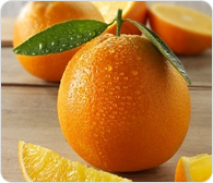 Fruits Orange Highline For Import And Export Egypt