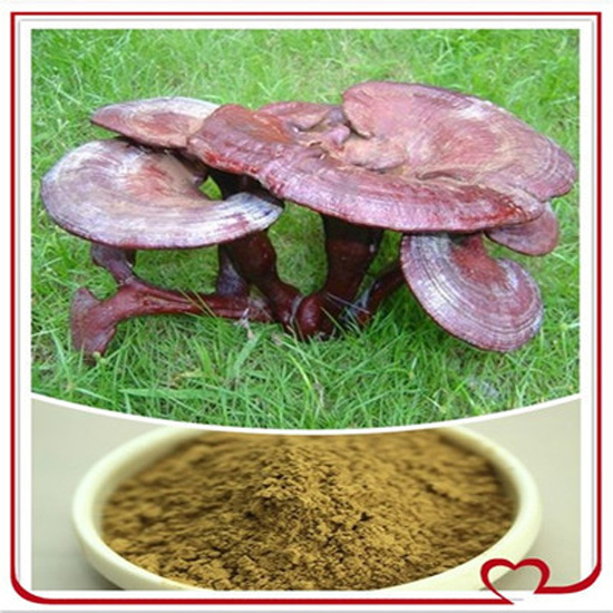 Ganoderma Lucidum Extract Powder High Medicine Value