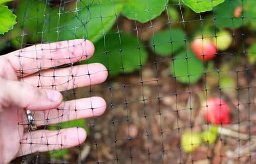 Garden Bird Netting With Various Mesh Openings To Control Birds