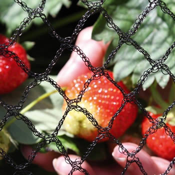 Garden Netting Different Types To Prevent Pests