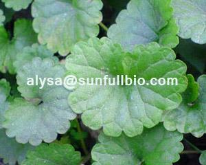 Gotu Kola Extract Asiaticoside