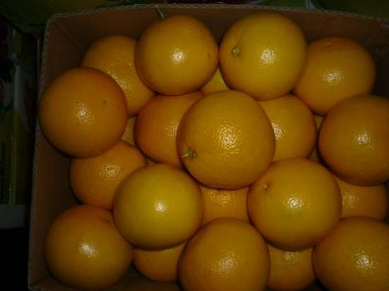 Grape Fruit With High Quality