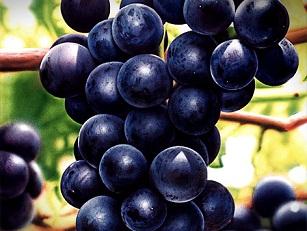 Grape Seed Opc 95 Uv