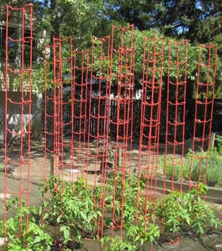 Heavy Duty Rigid Plastic Tomato Cages Defense Against Squirrels