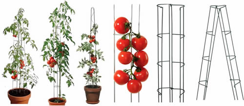 Heavy Duty Tomato Stakes From Galvanized Or Pvc Steel Tube