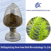 High Quality Huperzia Serrate Extract