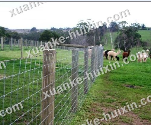 Horse Safety Fencing Animal Fence Farm Cattle Hebei Xuanke Huixin Best