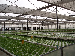 Horticulture Net Viewpoint
