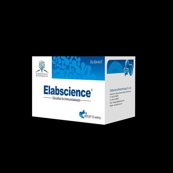 Human Dpp6 Dipeptidyl Peptidase Vi Elisa Kit