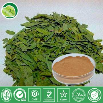 I Want To Sell Senna Leaf Extract