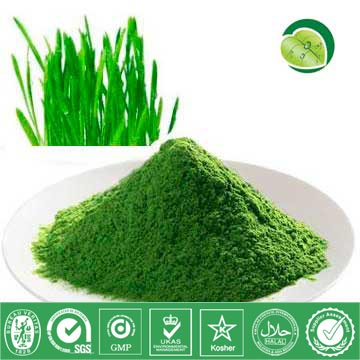 I Want To Sell Wheat Grass Powder
