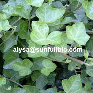 Ivy Extract Hederagenin