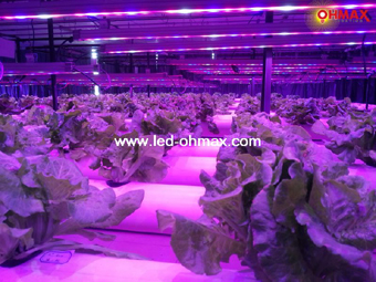 Led Grow Light To Make Plants Faster Harvest Better