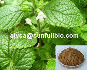 Lemon Balm Extract 3 5 Rosmarinic Acid
