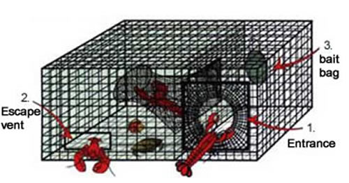 Lobster Traps Including Small